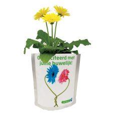 Seeds & Greets voorbeeld met Gerbera's