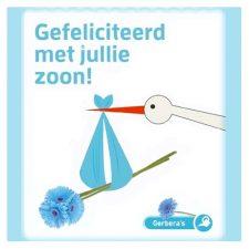 blauwe gerbera - gefeliciteerd met jullie zoon - seeds & greets