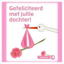 roze gerbera - gefeliciteerd met jullie dochter - seeds & greets
