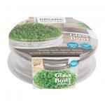 Buzzy® Organic Sprouting Glazen Bowl met Rucola